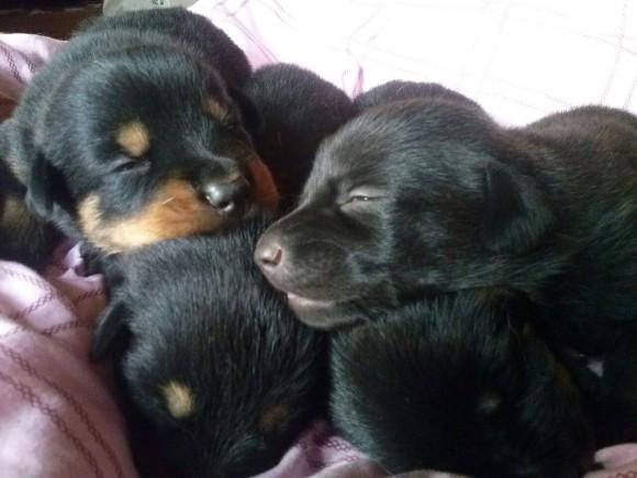 Cachorros de Elfa